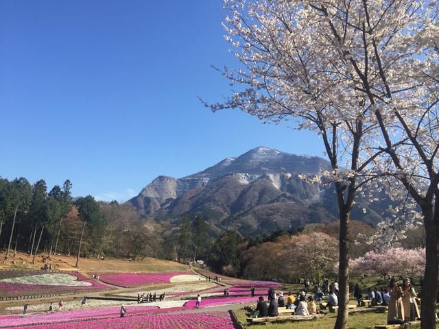 秩父羊山公園